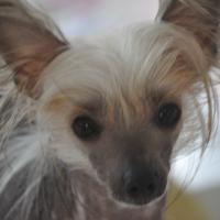 Photo de profil de Ulma