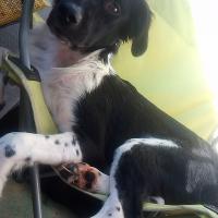 Photo de profil de Dolly