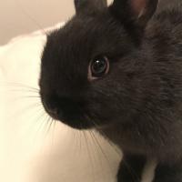 Photo de profil de Tchoupie