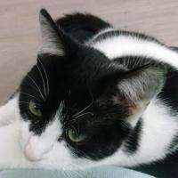 Photo de profil de Fouco