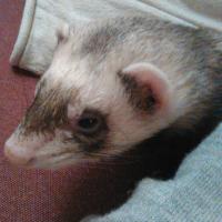 Photo de profil de Nirudy