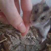 Photo de profil de Mira