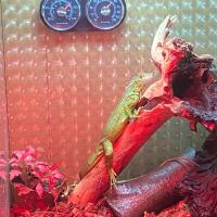 Photo de profil de Paco
