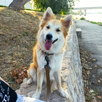 Photo de profil de Ovahkiin