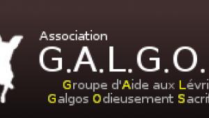 "Illustration : ""GALGOS"""