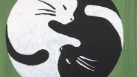 "Illustration : ""Association Protectrice Animale Amélienne"""