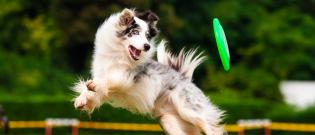 Illustration : L'hygiène de vie du chien