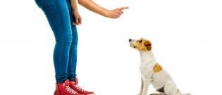 Illustration : Apprendre un ordre à son chien