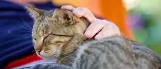 Illustration : Le choix du chat