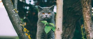 Illustration : L'hygiène de vie du chat