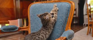 Illustration : Les problèmes de comportement chez le chat