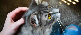 Illustration : Connaître son chat