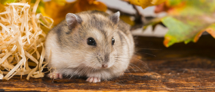 Illustration : Acheter un hamster