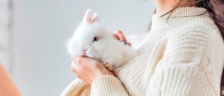 Illustration : L'achat d'un lapin