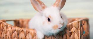 Illustration : L'habitat du lapin
