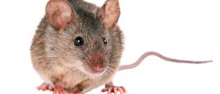 Illustration : L'achat d'une souris