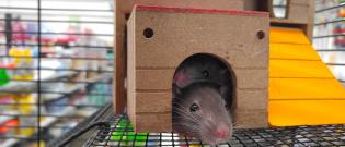 Illustration : L'habitat de la souris