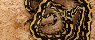 Illustration : L'habitat du serpent