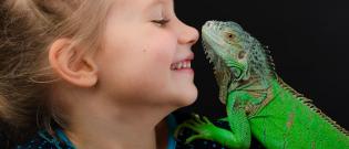 Illustration : L'achat d'un iguane