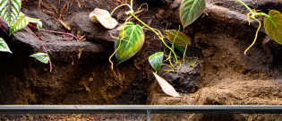 Illustration : L'habitat d'un iguane
