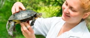 Illustration : L'achat d'une tortue