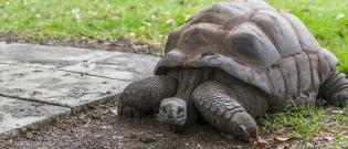 Illustration : L'habitat de la tortue