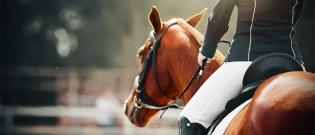 Illustration : L'achat du cheval : identifier ses besoins
