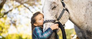 Illustration : Comment choisir son cheval ?