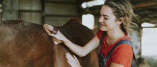 Illustration : L'hygiène de vie du cheval