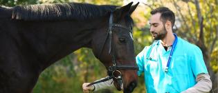 Illustration : Les problèmes de santé du cheval