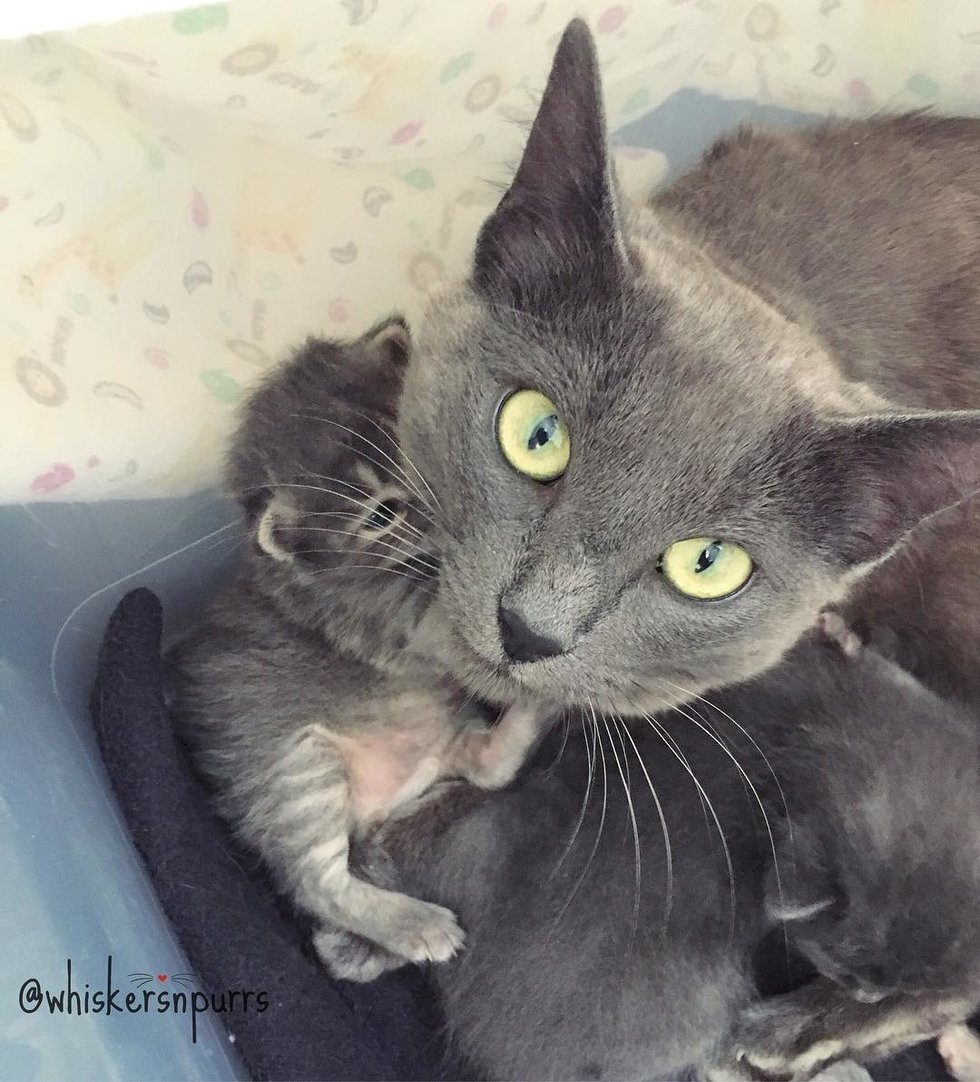 nouveau noir chatte photos