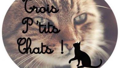 "Illustration : ""Trois P'tits Chats"""