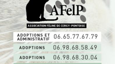 """Illustration : """"Association Féline de Cergy Pontoise - AFELP"""""""