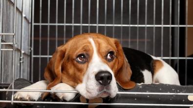 Photo : Meilleure cage pour chien