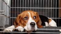 """Illustration : """"Meilleure cage pour chien"""""""