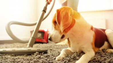 Photo : Meilleur aspirateur pour poils de chien