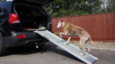 Photo : Meilleure rampe pour chien