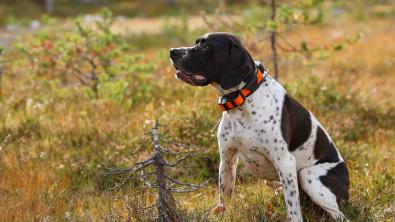 Photo : Meilleur collier GPS pour chien