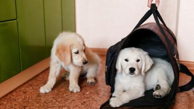 Photo : Meilleur sac de transport pour chien