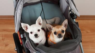 Photo : Meilleure poussette pour chien