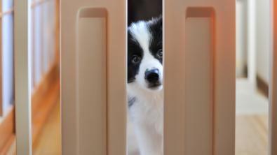Photo : Meilleure barrière pour chien
