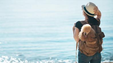 Photo : Meilleur sac à dos pour chien