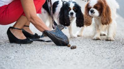 Photo : Meilleur ramasse crottes de chien