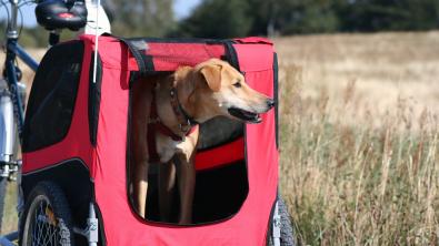 Photo : Meilleure remorque vélo pour chien