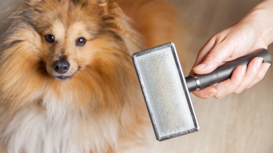 Photo : Meilleure brosse pour chien