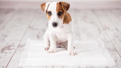 Photo : Meilleure litière pour chien