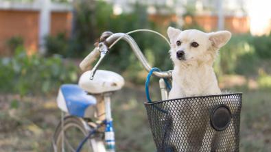Photo : Meilleur panier vélo pour chien