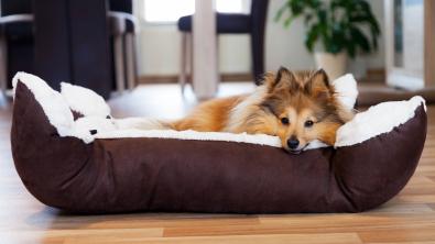 Photo : Meilleur panier pour chien