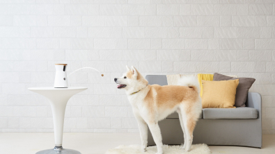 Photo : Meilleure caméra connectée pour chien