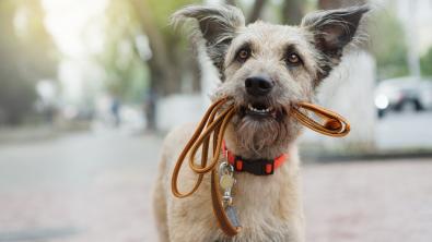 Photo : Meilleure laisse pour chien